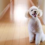 コラム「ペットも快適に過ごせる家」のサムネイル画像