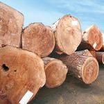 コラム「本物の木(無垢材)の効果」のサムネイル画像